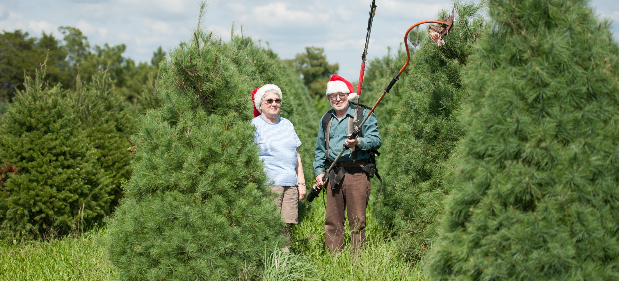 Get Fresh & Fragrant, Buy a Local Christmas Tree | Marylands Best