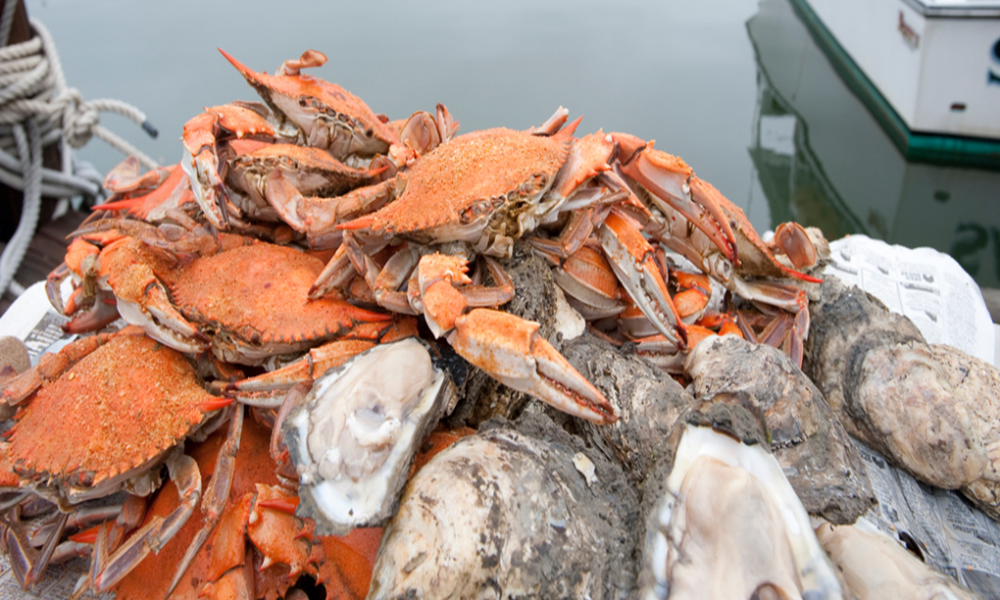 Enjoy Maryland Crabs!