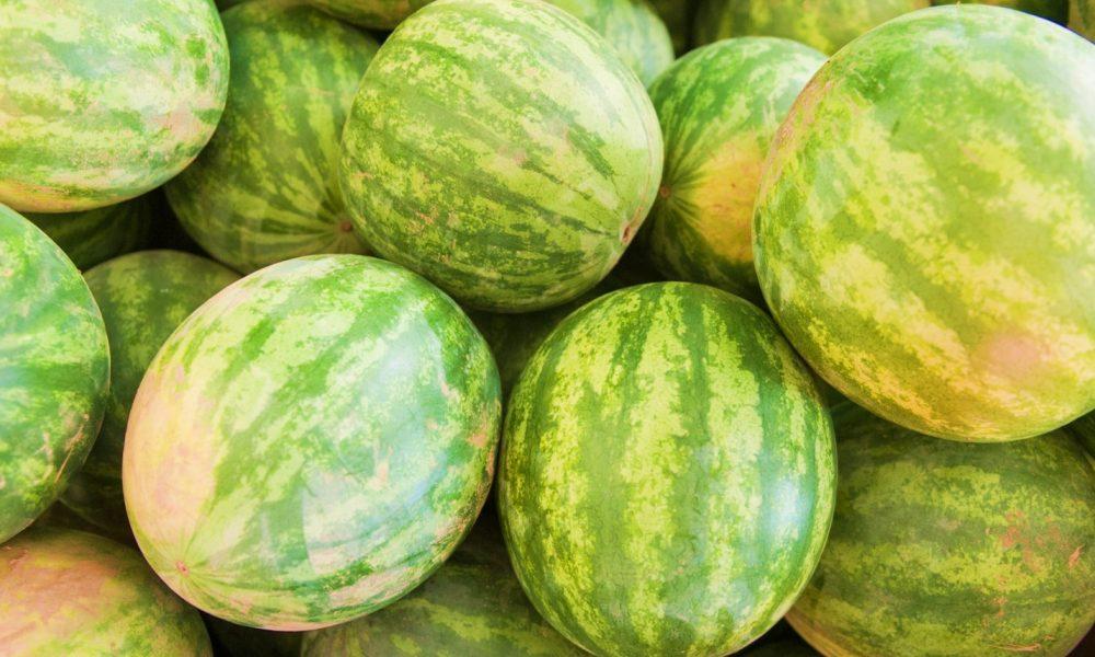 Maryland Watermelon Season!