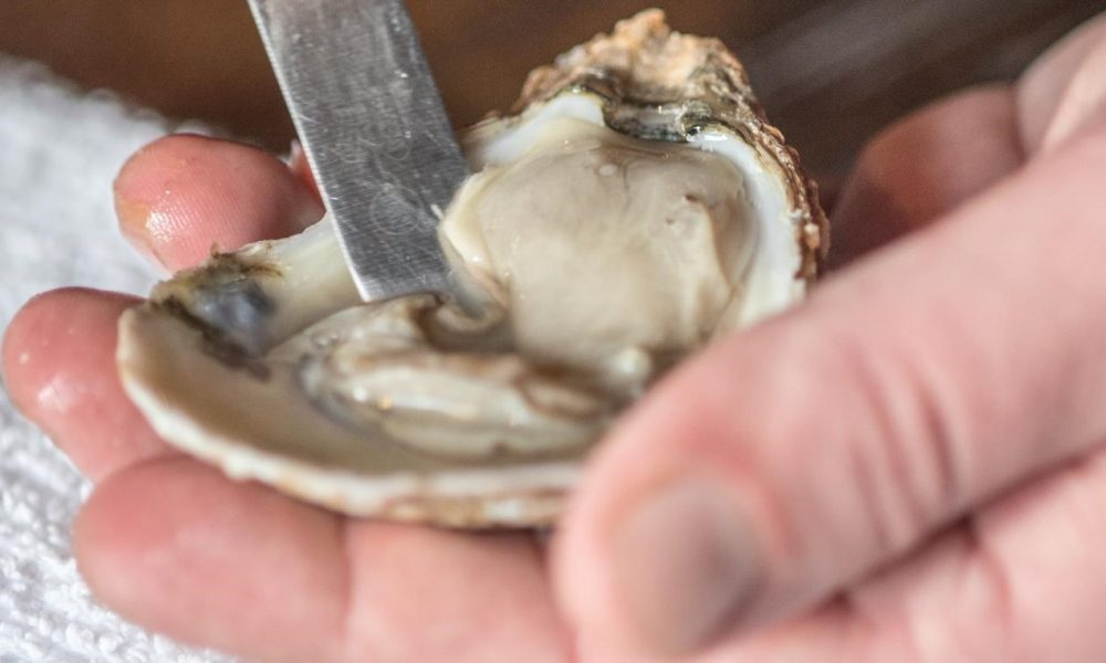 Choose Maryland Oysters
