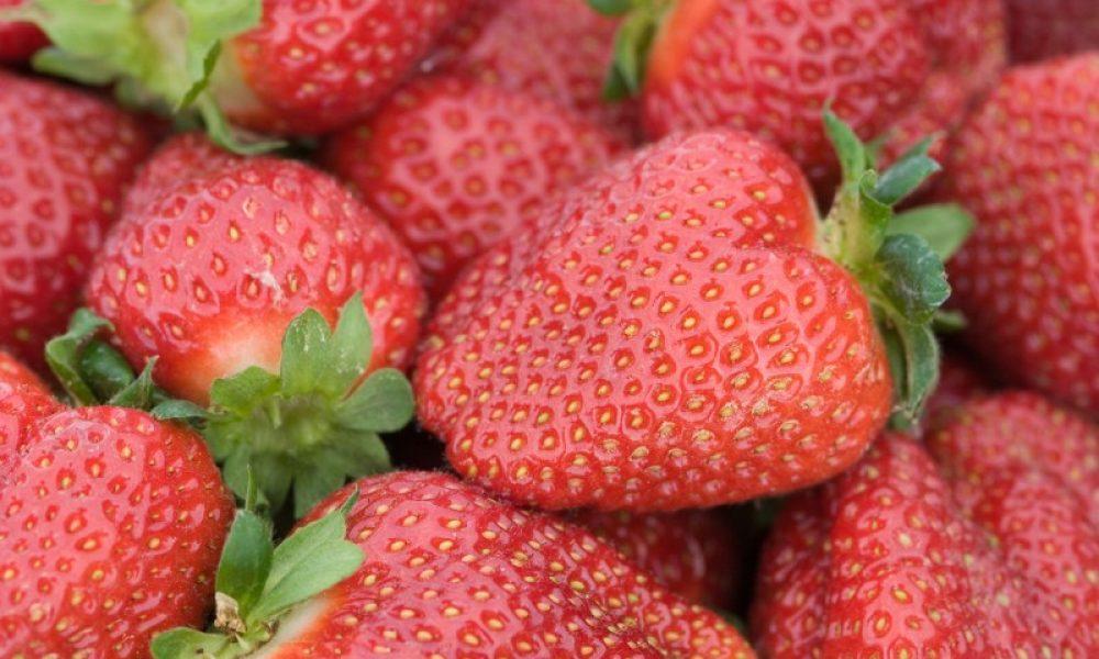 Sweet Maryland Strawberries