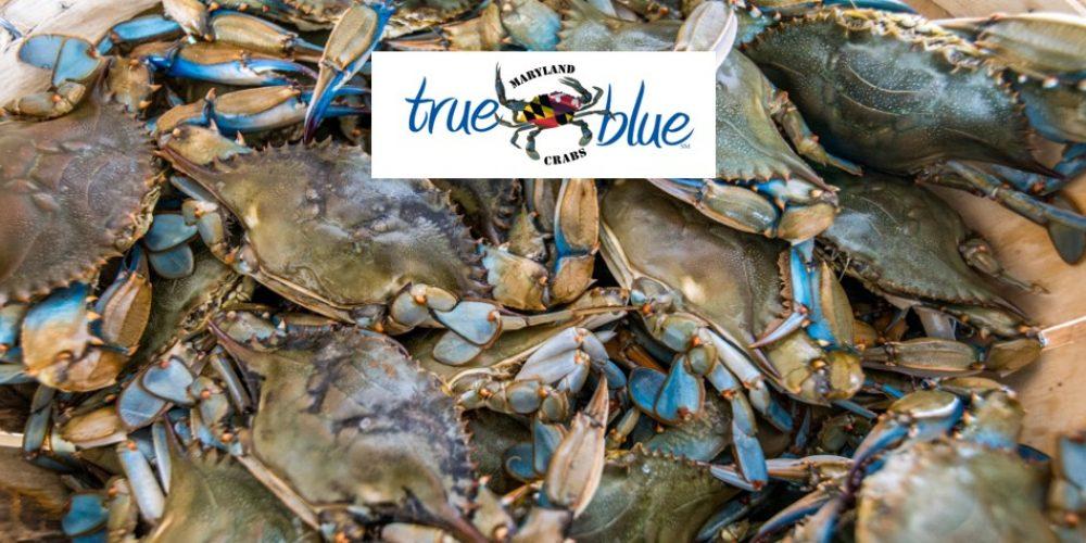 Maryland True Blue Crabs