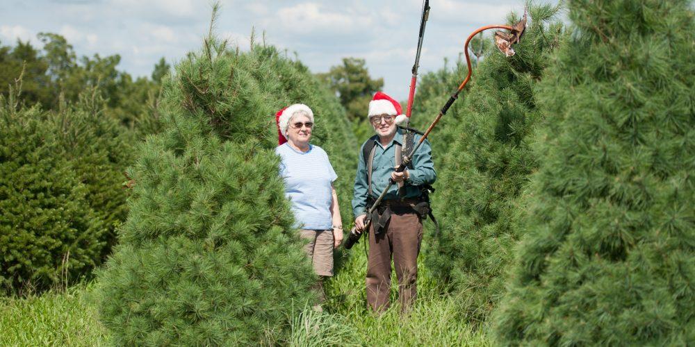 Get Fresh & Fragrant, Buy a Local Christmas Tree