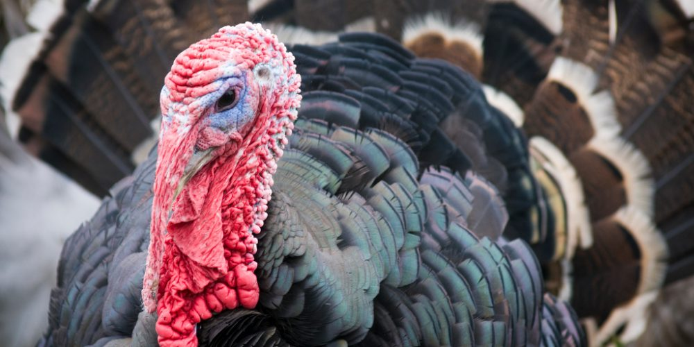Get your greens, turkey, oysters and sip Maryland wine!