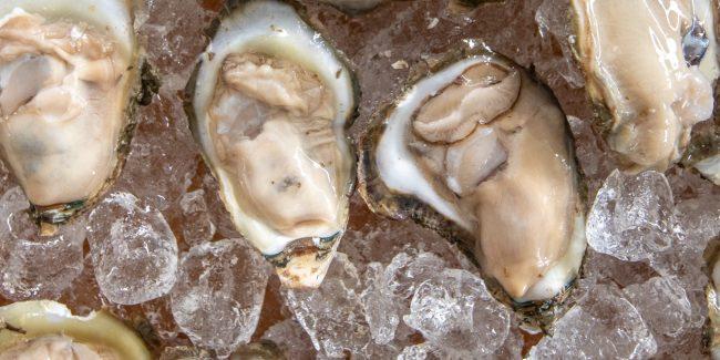 Maryland Oyster Season