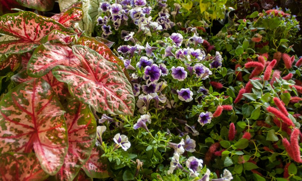 Celebrate Spring! Find plants and flowers at Maryland farmstands, farmers markets
